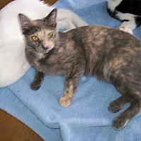 Adopt A Pet :: Athena - Scottsdale, AZ