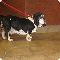 Adopt A Pet :: RoseBud - Barrington, IL