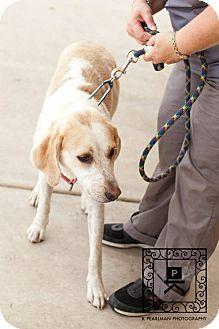 Hound (Unknown Type) Mix Dog for adoption in Fredericksburg, Virginia - AL#15-1413