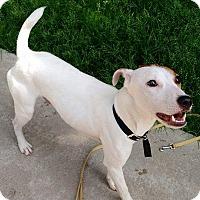 Adopt A Pet :: Duke - Brant, ON