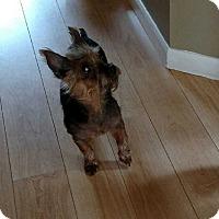 Adopt A Pet :: Casey - Gig Harbor, WA