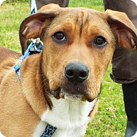 Adopt A Pet :: Bailey - Grants Pass, OR