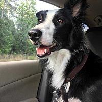 Adopt A Pet :: Trouble - Sarasota, FL