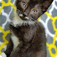 Adopt A Pet :: Mario - Hornell, NY