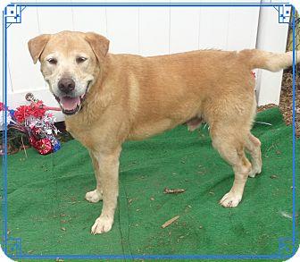 Labrador Retriever Mix Dog for adoption in Marietta, Georgia - BUDDY