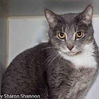 Adopt A Pet :: DEUX - Albuquerque, NM