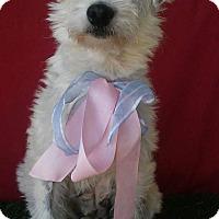 Adopt A Pet :: BUBBA - Irvine, CA