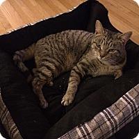 Adopt A Pet :: Gracie Jones - Chicago, IL