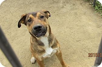 Shepherd (Unknown Type) Mix Dog for adoption in Walthill, Nebraska - Clifford