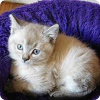 Adopt A Pet :: Squeek - Davis, CA
