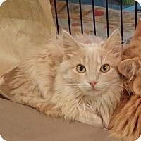 Adopt A Pet :: Smith - Colmar, PA