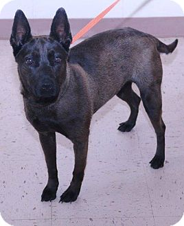 Shepherd (Unknown Type) Mix Dog for adoption in McDonough, Georgia - Winni