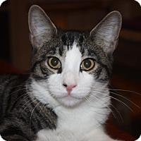 Adopt A Pet :: Forrest (LE) - Little Falls, NJ