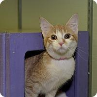 Adopt A Pet :: Poppycock - Medina, OH