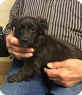 Border Collie Mix Puppy for adoption in Metairie, Louisiana - LAVERNE