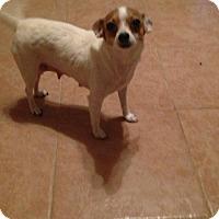 Adopt A Pet :: Princess - Loxahatchee, FL