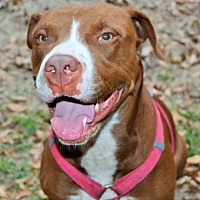 Adopt A Pet :: Aries - Tampa, FL