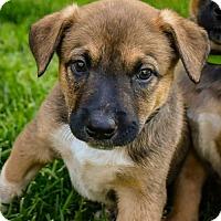 Adopt A Pet :: Hades - Denver, CO