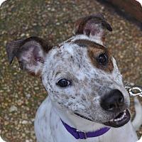 Adopt A Pet :: Emmie - Atlanta, GA