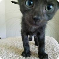 Adopt A Pet :: Pitch - RICKI'S PET DEPOT - Knoxville, TN