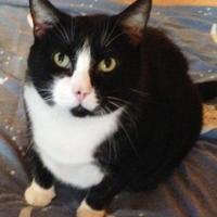 Adopt A Pet :: Marty - Independence, MO