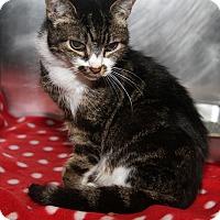 Adopt A Pet :: Xena (Combo Tested) - Marietta, OH