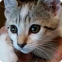 Adopt A Pet :: Venus - Tracy, CA