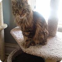 Adopt A Pet :: Gerard - Codorus, PA