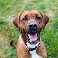 Adopt A Pet :: Indie - Lake Odessa, MI