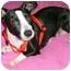 Photo 2 - Boston Terrier Mix Dog for adoption in North Augusta, South Carolina - PIXIE