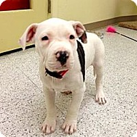 Adopt A Pet :: Enya - Phoenix, AZ