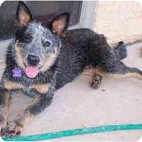 Adopt A Pet :: Tanka - Phoenix, AZ