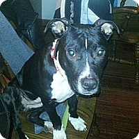 Adopt A Pet :: Camille LOVE BUG! - Oak Creek, WI