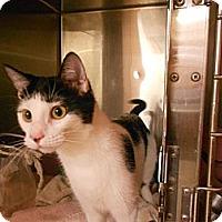 Adopt A Pet :: Ms. Moo - Maywood, NJ