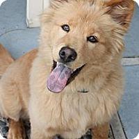 Adopt A Pet :: Waffles - La Habra Heights, CA