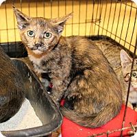 Adopt A Pet :: Peachy - Rochester, MN