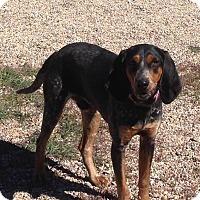 Adopt A Pet :: Ralph - Cedar City, UT