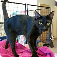 Adopt A Pet :: Scarlett - Maryville, TN