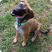 Adopt A Pet :: Daisy - Manhattan, NY