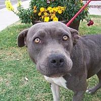 Adopt A Pet :: Momma Mia - Glendale, AZ