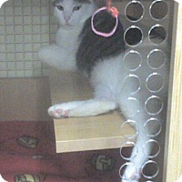 Adopt A Pet :: Michu (Petco Hamilton Square) - Trenton, NJ