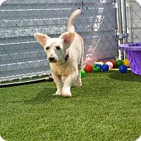 Adopt A Pet :: Zeke - Meridian, ID