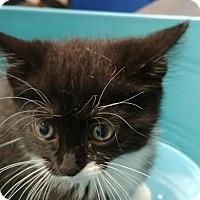 Adopt A Pet :: Ilka - Camden, DE