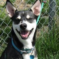 Adopt A Pet :: Balto - Winfield, KS