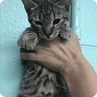 Adopt A Pet :: Florence - Newport, NC