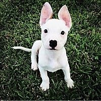 Adopt A Pet :: Grizwald James - Lake Jackson, TX