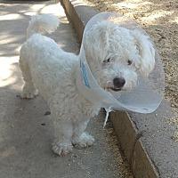 Adopt A Pet :: Kilo - La Puente, CA