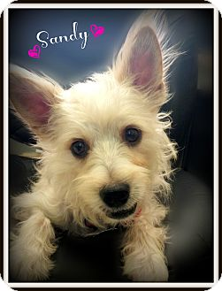 Terrier (Unknown Type, Small) Mix Dog for adoption in Pascagoula, Mississippi - Sandy