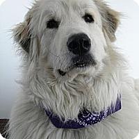 Adopt A Pet :: Hugo - Monteregie, QC