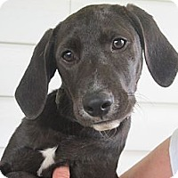 Adopt A Pet :: Luther - Windham, NH